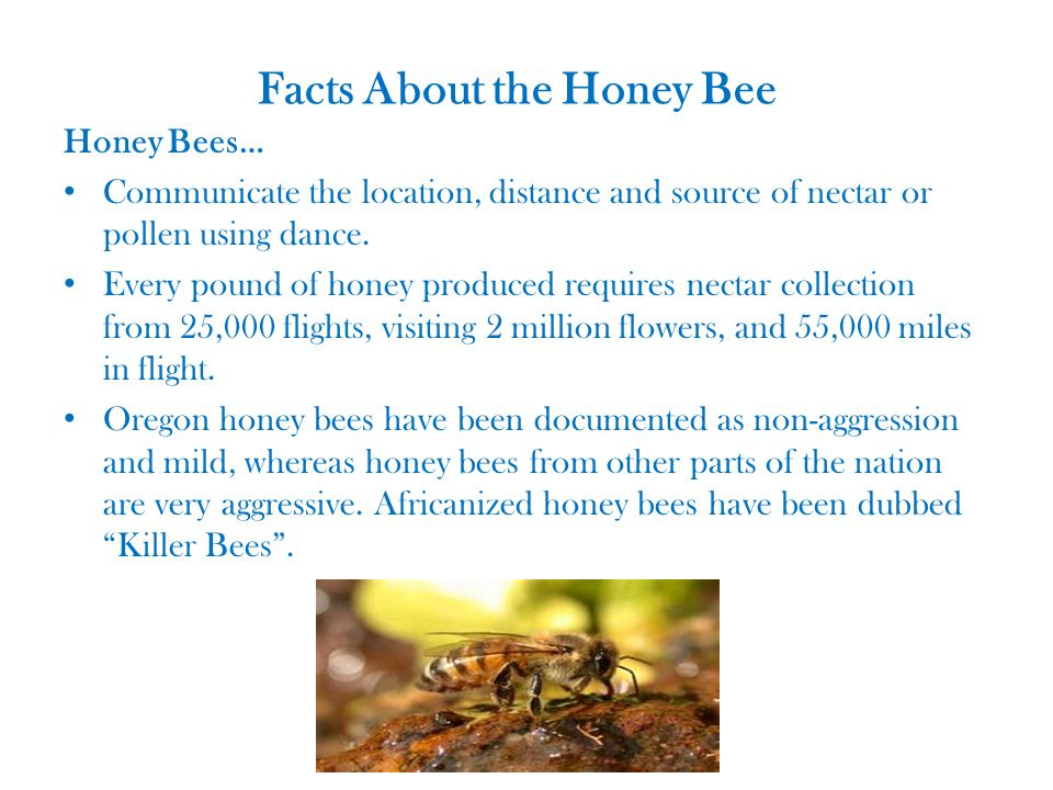 Facts About the Honey Bee Honey Bees… Communicate the location, distance and source of nectar or pollen using dance.