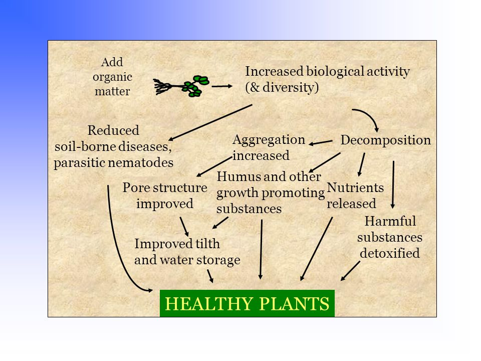 Add organic matter Increased biological activity (& diversity) Decomposition Nutrients released Aggregation increased Pore structure improved Humus and other growth promoting substances Reduced soil-borne diseases, parasitic nematodes Improved tilth and water storage HEALTHY PLANTS Harmful substances detoxified
