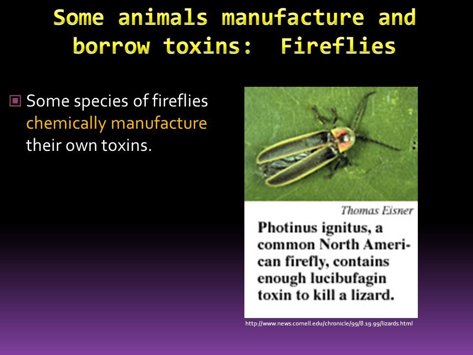Some species of fireflies borrow toxins by eating the firefly that produces the chemicals.