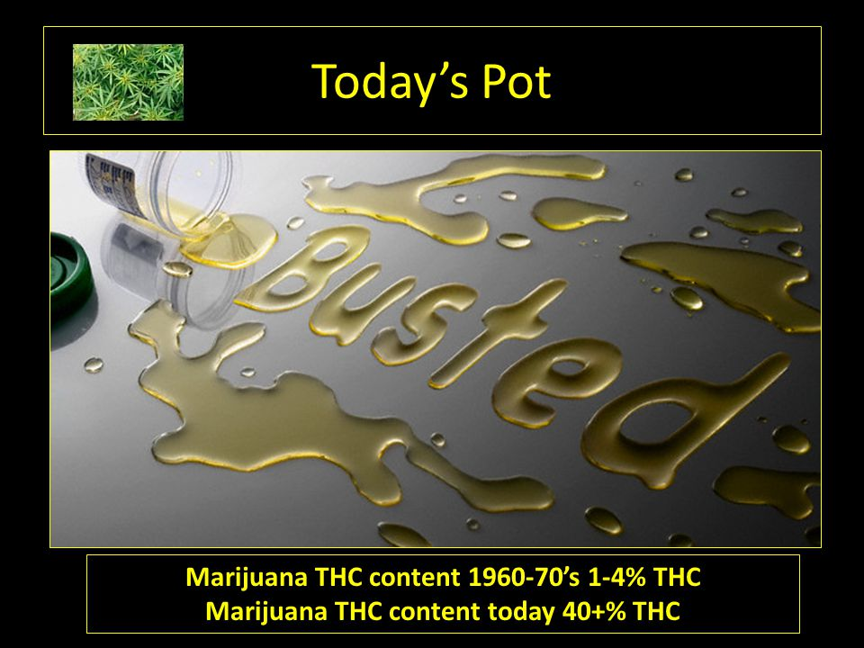 Today's Pot Marijuana THC content 1960-70's 1-4% THC Marijuana THC content today 40+% THC