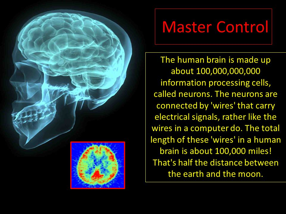Master Control The human brain is made up about 100,000,000,000 information processing cells, called neurons.