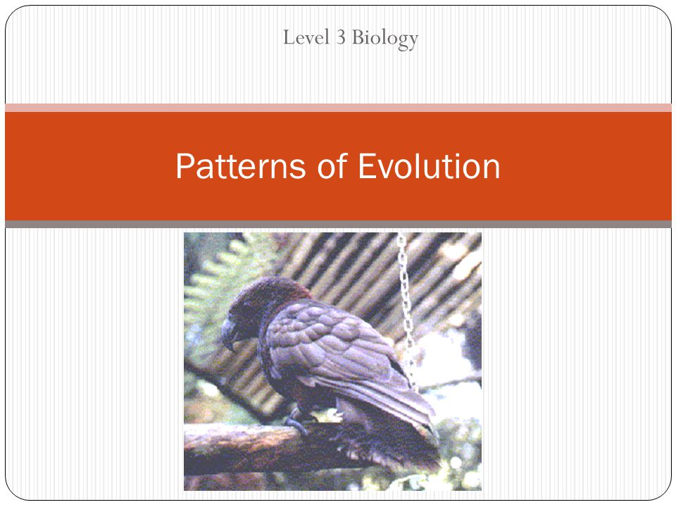 Level 3 Biology Patterns of Evolution