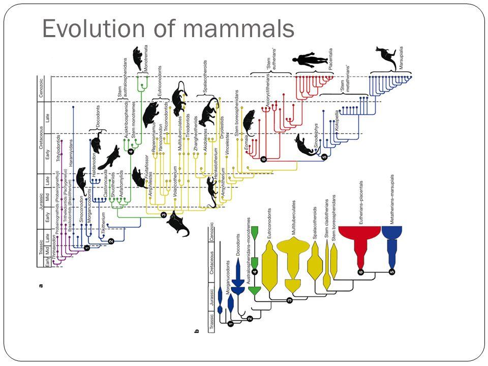 Evolution of mammals