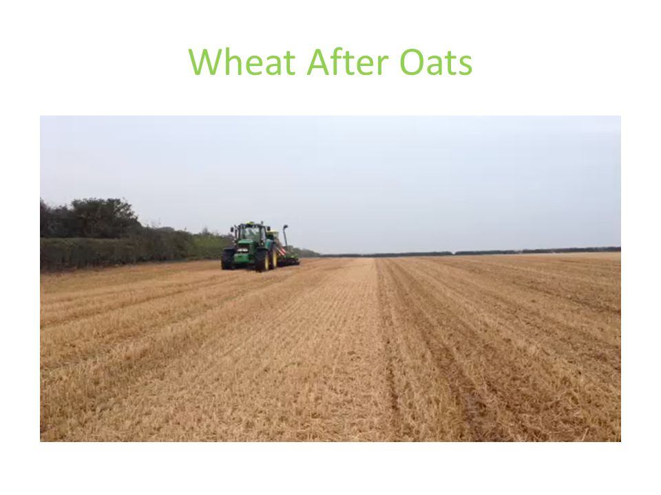 Wheat After Oats
