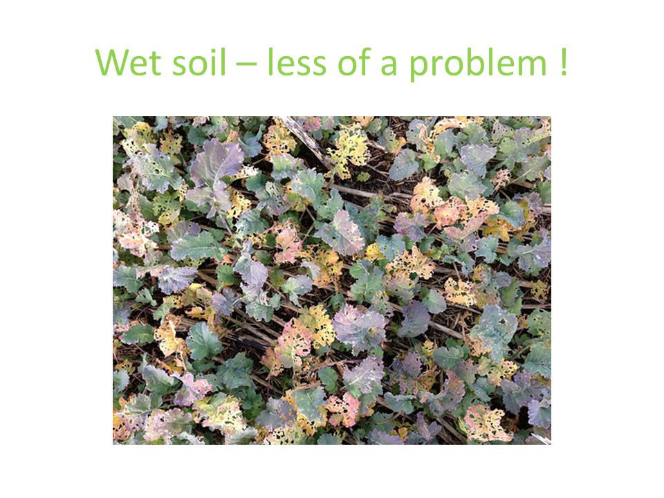 Wet soil – less of a problem !