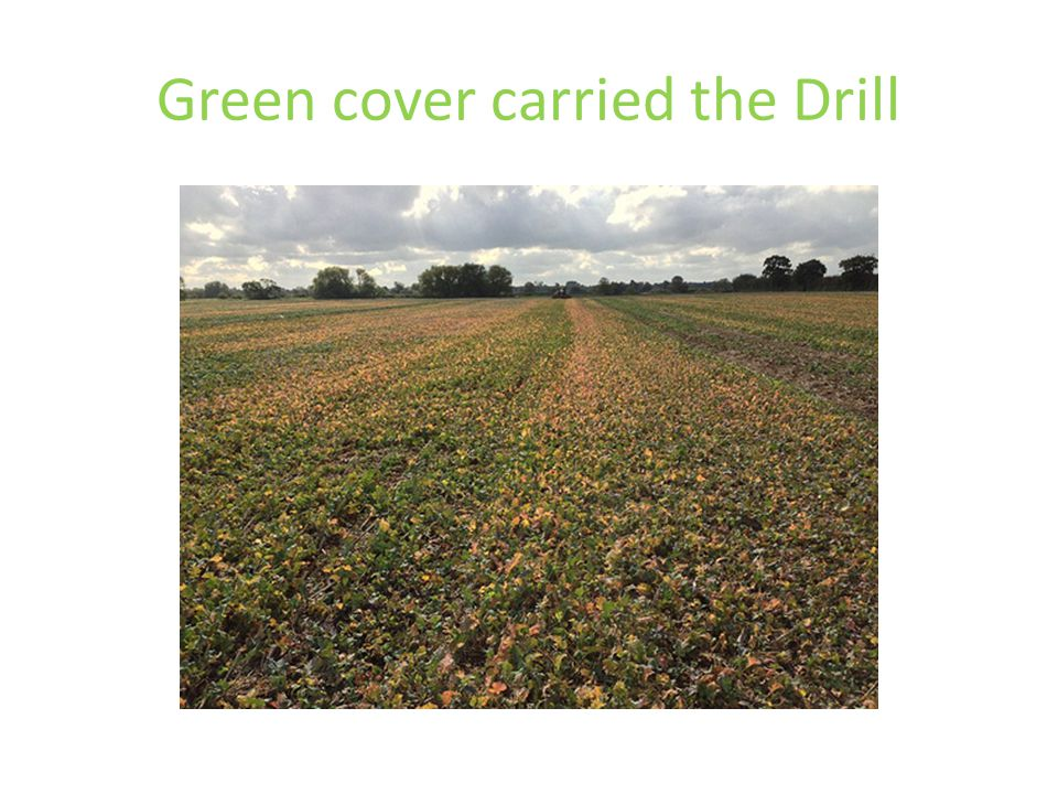 Green cover carried the Drill