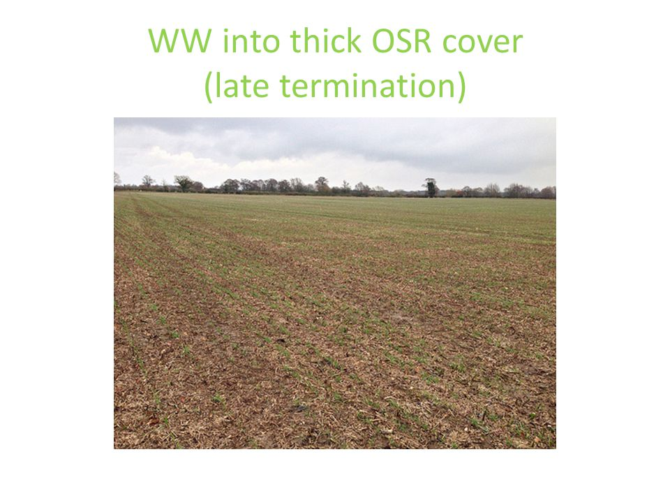 WW into thick OSR cover (late termination)