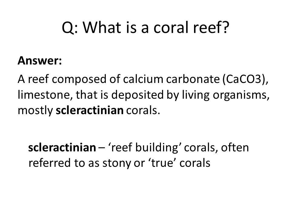 Q: What is a coral reef.