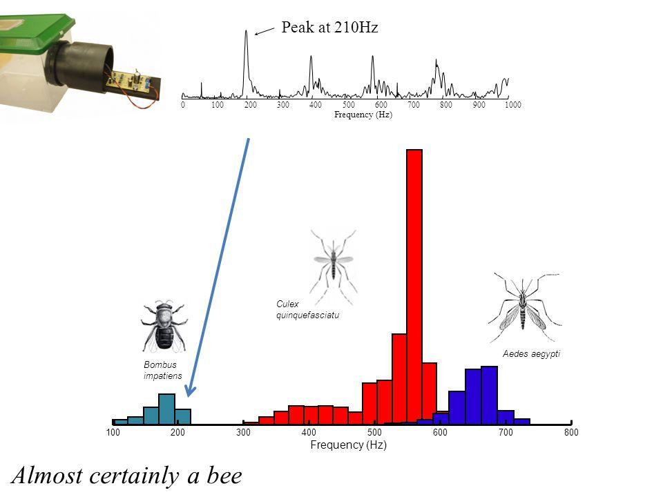 100200300400500600700800 Frequency (Hz) Bombus impatiens Culex quinquefasciatu Aedes aegypti 01002003004005006007008009001000 Frequency (Hz) Peak at 210Hz Almost certainly a bee