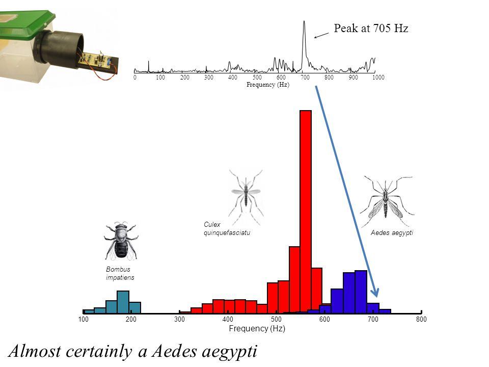 100200300400500600700800 Frequency (Hz) Bombus impatiens Culex quinquefasciatu Aedes aegypti 01002003004005006007008009001000 Frequency (Hz) Peak at 705 Hz Almost certainly a Aedes aegypti