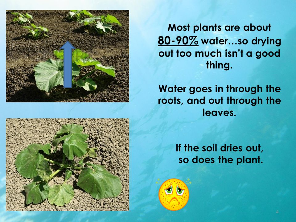 Most plants are about 80-90% water…so drying out too much isn't a good thing.
