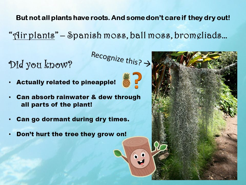 But not all plants have roots. And some don't care if they dry out.