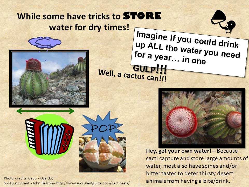 While some have tricks to STORE water for dry times.