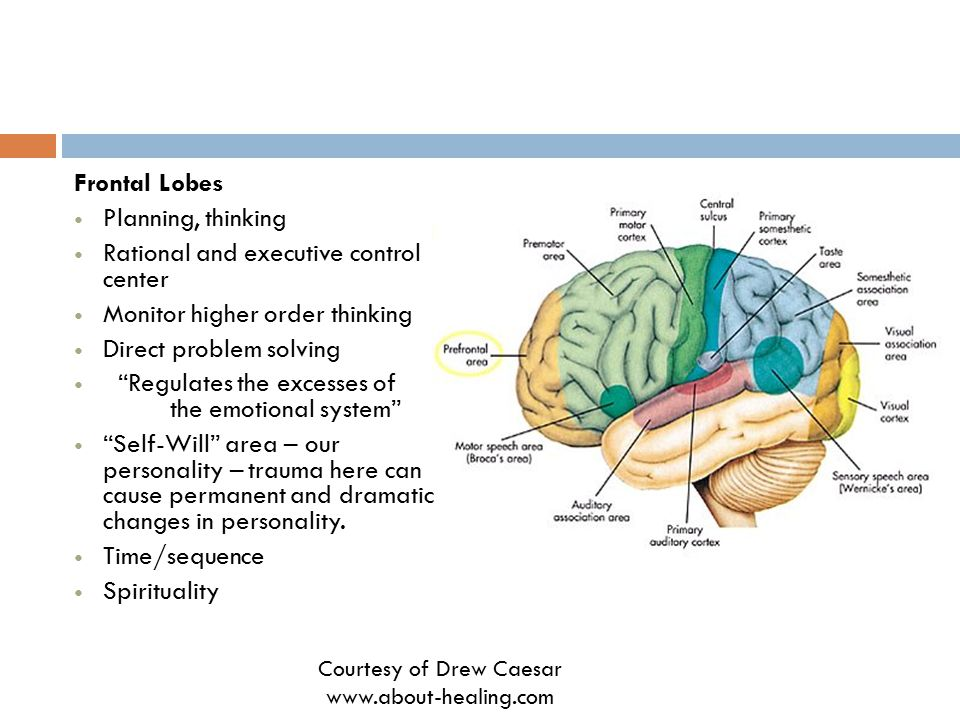 Frontal Lobes Planning, thinking Rational and executive control center Monitor higher order thinking Direct problem solving Regulates the excesses of the emotional system Self-Will area – our personality – trauma here can cause permanent and dramatic changes in personality.