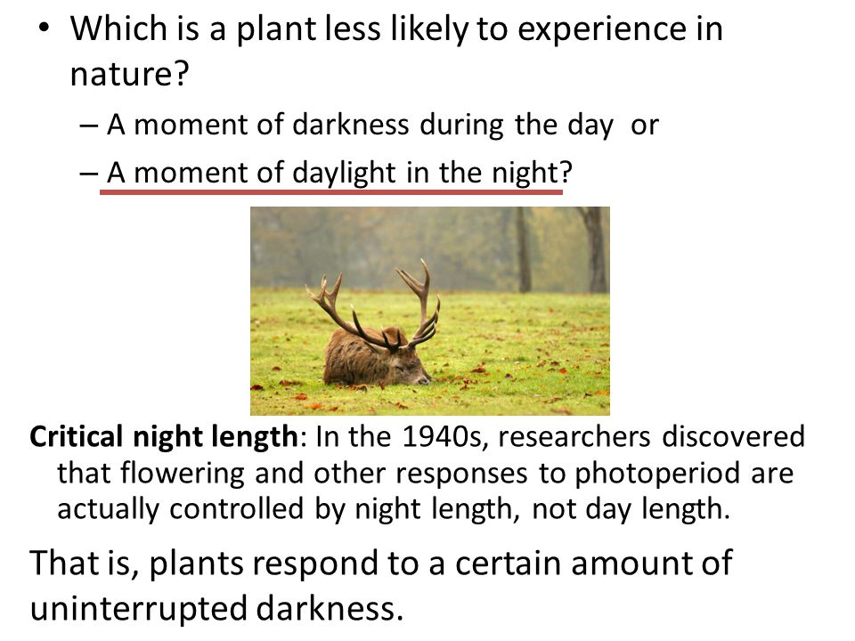 Which is a plant less likely to experience in nature? – A moment of darkness during the day or – A moment of daylight in the night? Critical night len