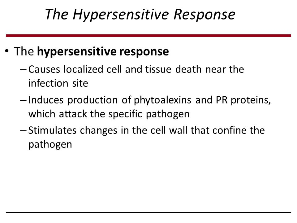 The Hypersensitive Response The hypersensitive response – Causes localized cell and tissue death near the infection site – Induces production of phyto