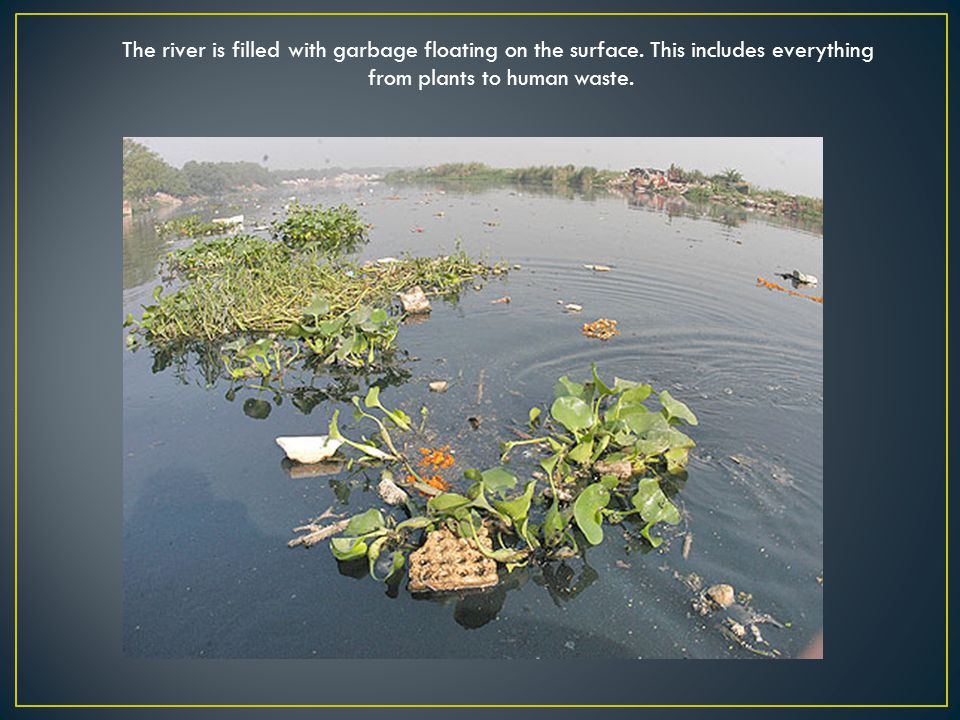 The river is filled with garbage floating on the surface. This includes everything from plants to human waste..