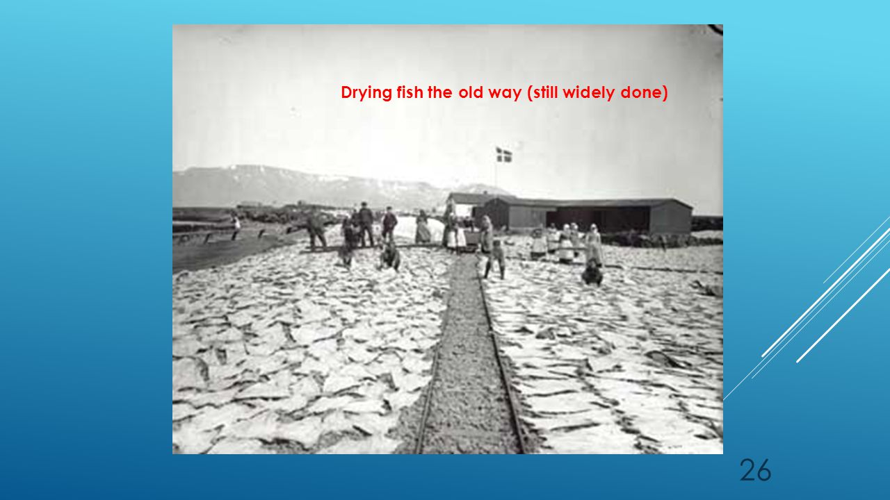 26 Drying fish the old way (still widely done)