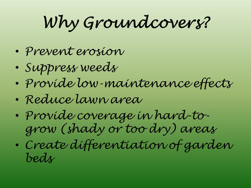 Why Groundcovers.