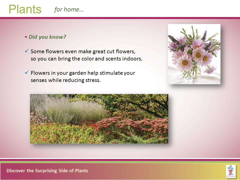 Discover the Surprising Side of Plants Plants for home… Did you know.