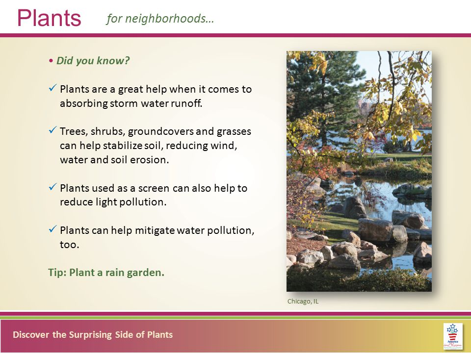 Discover the Surprising Side of Plants Plants for neighborhoods… Did you know.