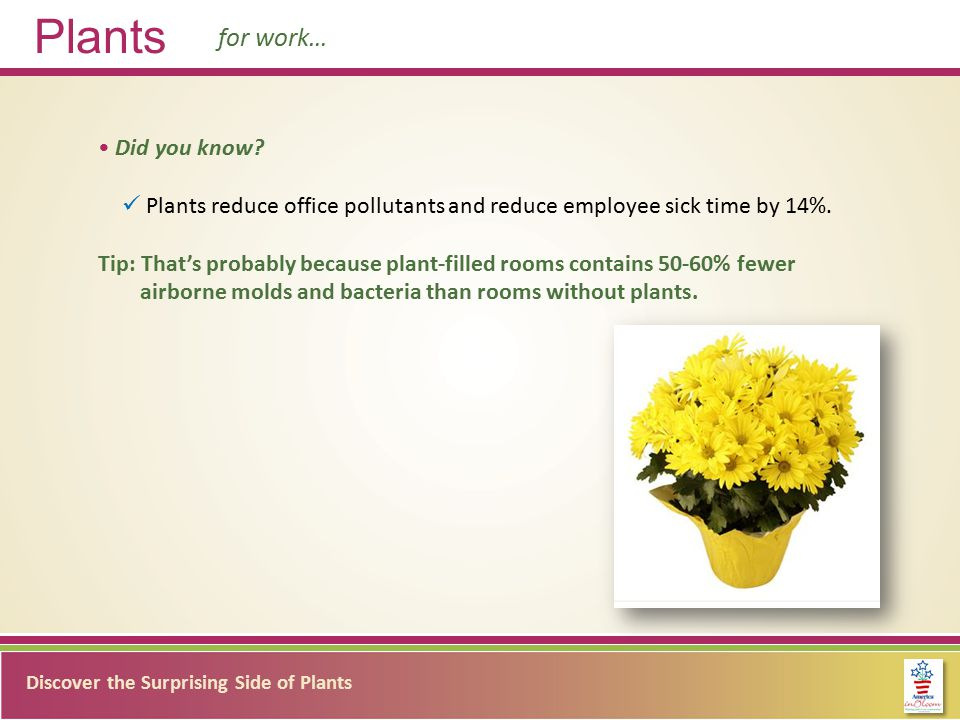 Discover the Surprising Side of Plants Plants for work… Did you know.