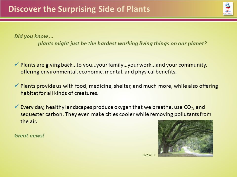 Discover the Surprising Side of Plants Plants for community… Could more plants improve your town.