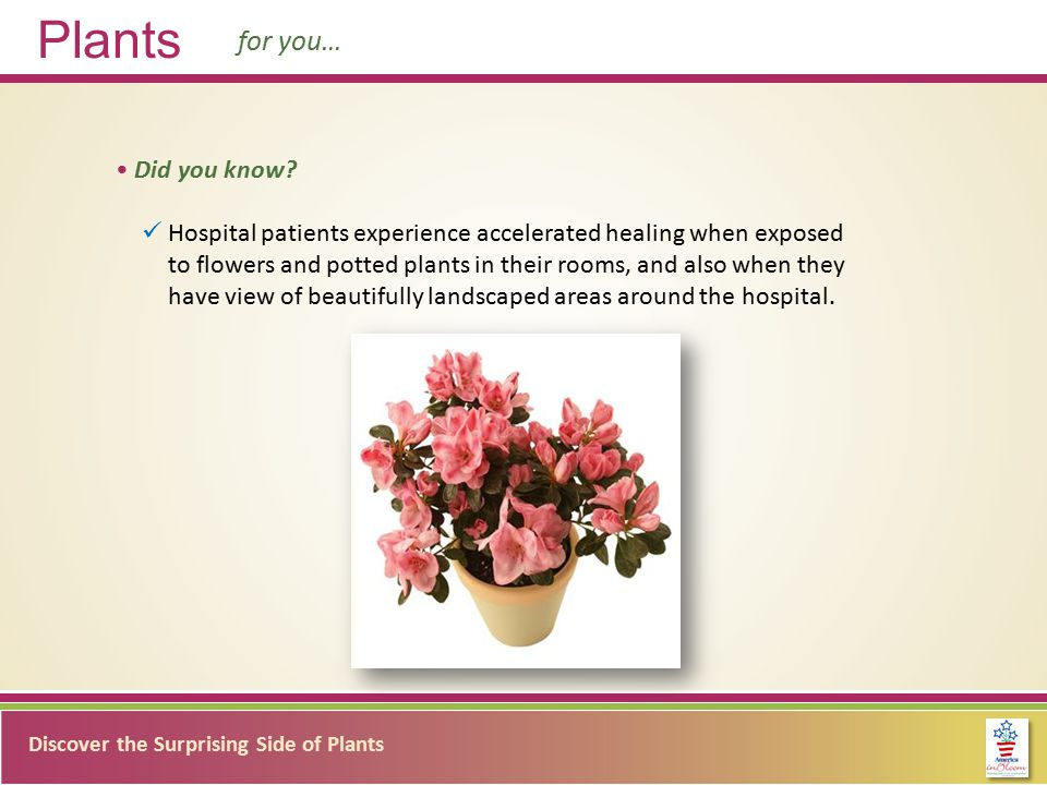 Discover the Surprising Side of Plants Plants for you… Did you know.