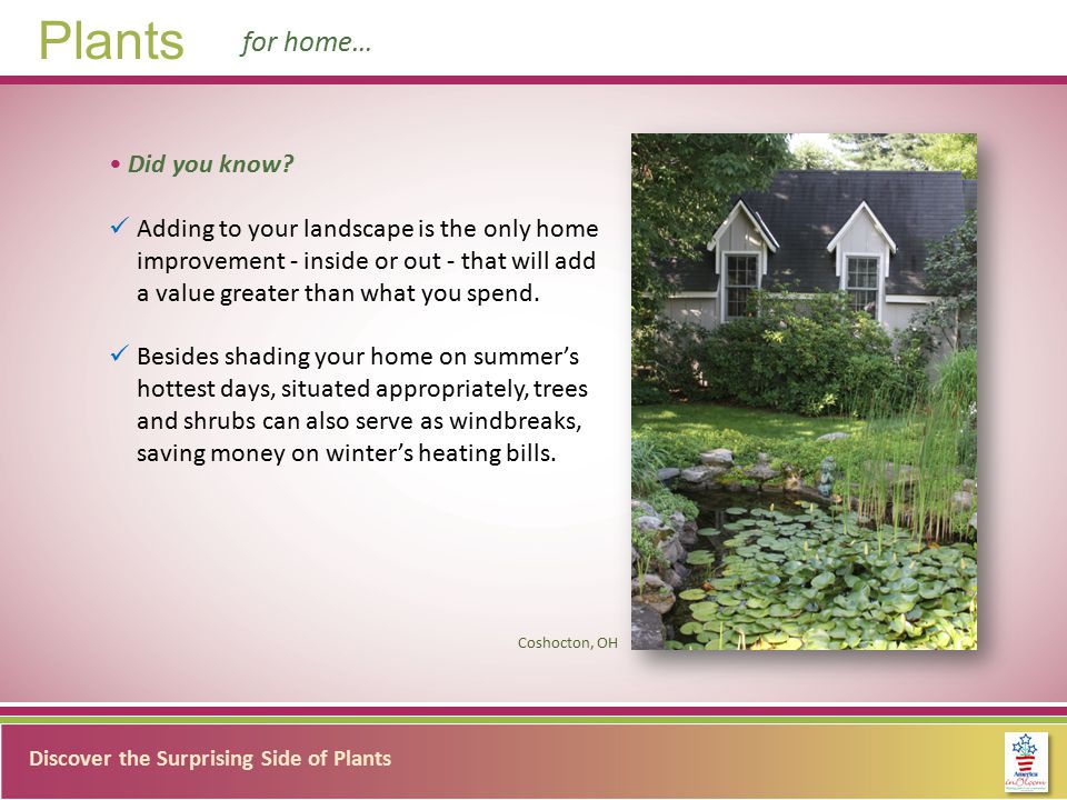 Discover the Surprising Side of Plants Plants for community… Did you know.