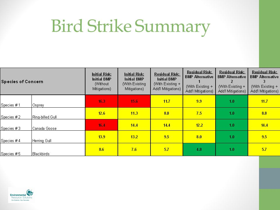 Bird Strike Summary