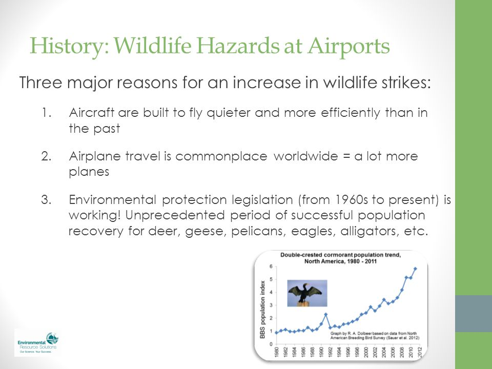 History: Wildlife Hazards at Airports Three major reasons for an increase in wildlife strikes: 1.Aircraft are built to fly quieter and more efficientl