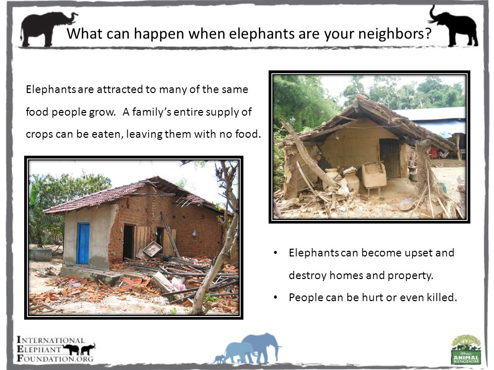 What can happen when elephants are your neighbors.