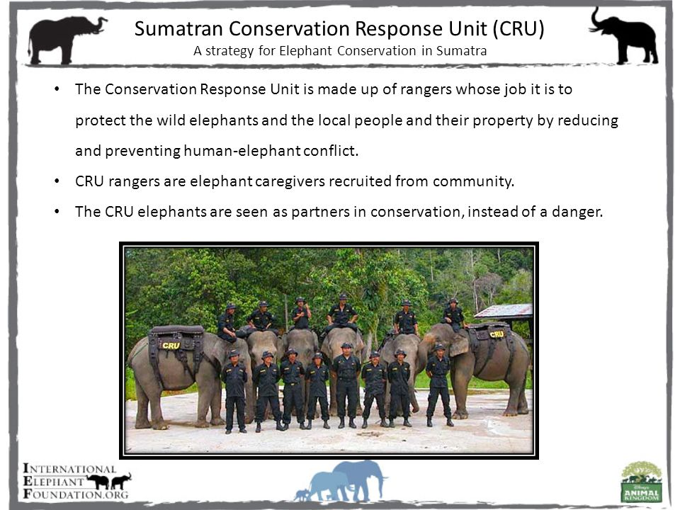 Sumatran Conservation Response Unit (CRU) A strategy for Elephant Conservation in Sumatra The Conservation Response Unit is made up of rangers whose job it is to protect the wild elephants and the local people and their property by reducing and preventing human-elephant conflict.