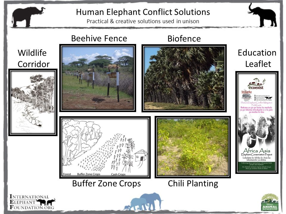 Thick palm trees form a strong fence Adult palmyra trees are self-sufficient Requires community investment Creates green paths for elephants Protects historic migration routes Depends on community involvement CRU distribute to local villages To Do's and Don't Do's Brings CRU into the village Biofencing Wildlife Corridor Education Leaflets Human Elephant Conflict Solutions Practical & creative solutions used in unison