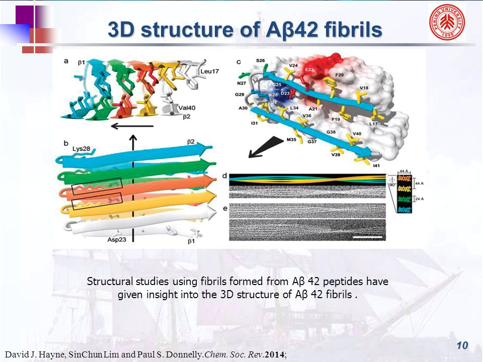 10 3D structure of Aβ42 fibrils Structural studies using fibrils formed from Aβ 42 peptides have given insight into the 3D structure of Aβ 42 fibrils.