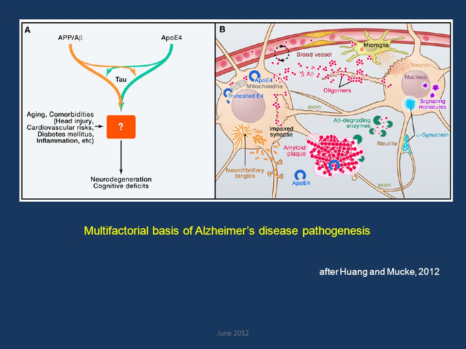 June 2012 after Huang and Mucke, 2012 axon Multifactorial basis of Alzheimer's disease pathogenesis