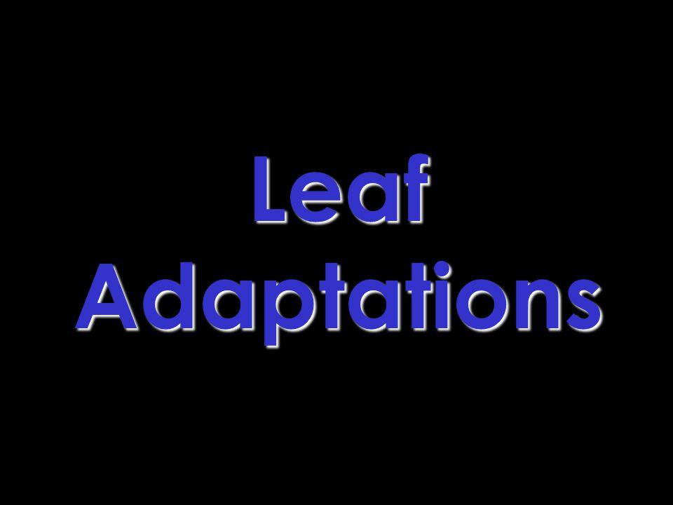 LeafAdaptations