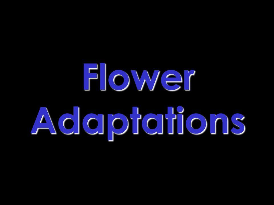 FlowerAdaptations