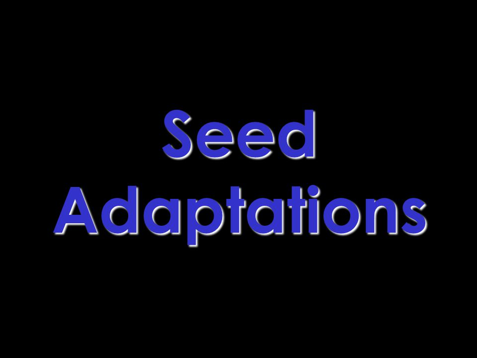 SeedAdaptations
