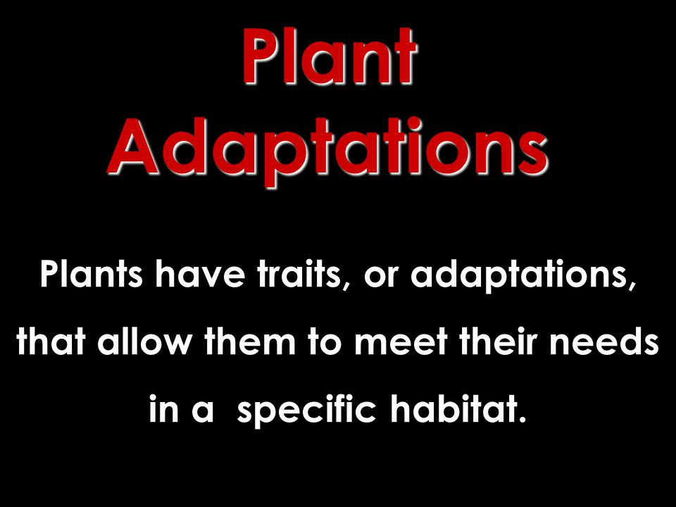 Plants have traits, or adaptations, that allow them to meet their needs in a specific habitat.