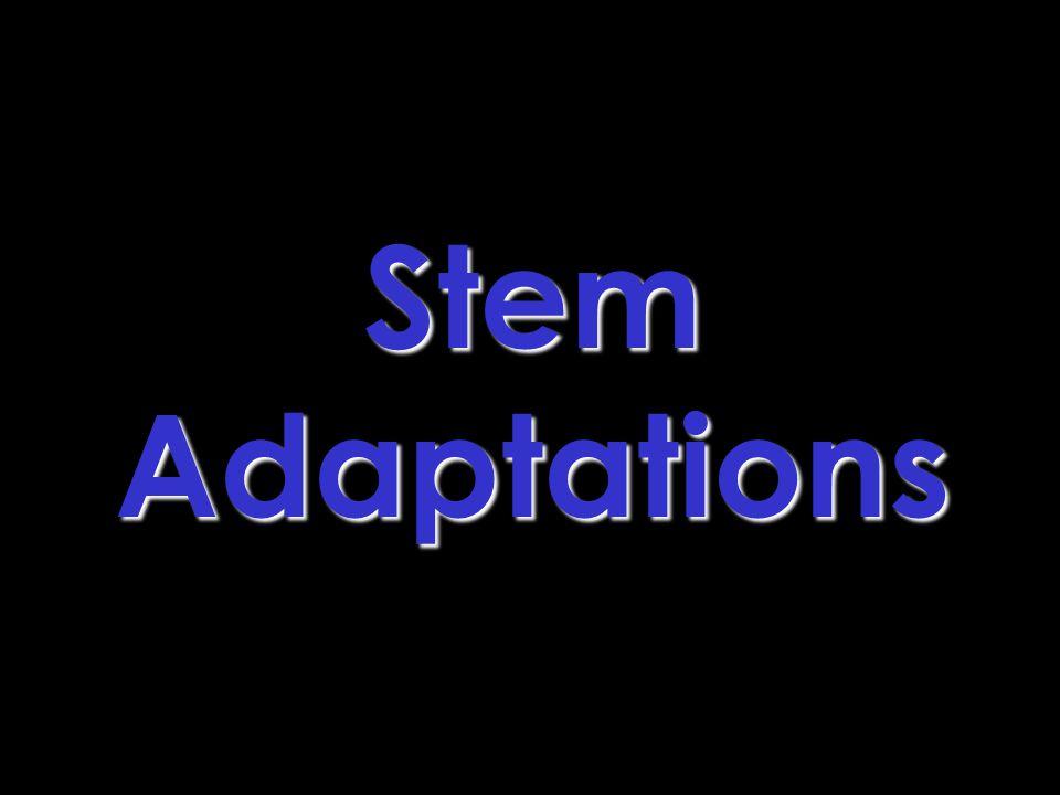 StemAdaptations