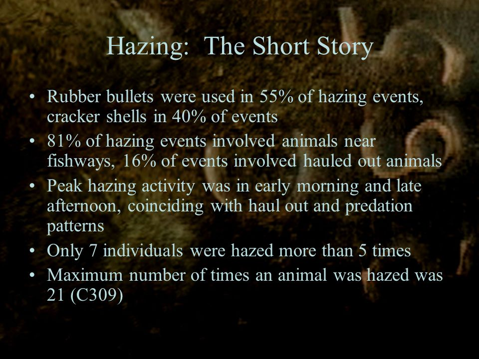 Hazing: The Short Story Rubber bullets were used in 55% of hazing events, cracker shells in 40% of events 81% of hazing events involved animals near fishways, 16% of events involved hauled out animals Peak hazing activity was in early morning and late afternoon, coinciding with haul out and predation patterns Only 7 individuals were hazed more than 5 times Maximum number of times an animal was hazed was 21 (C309)