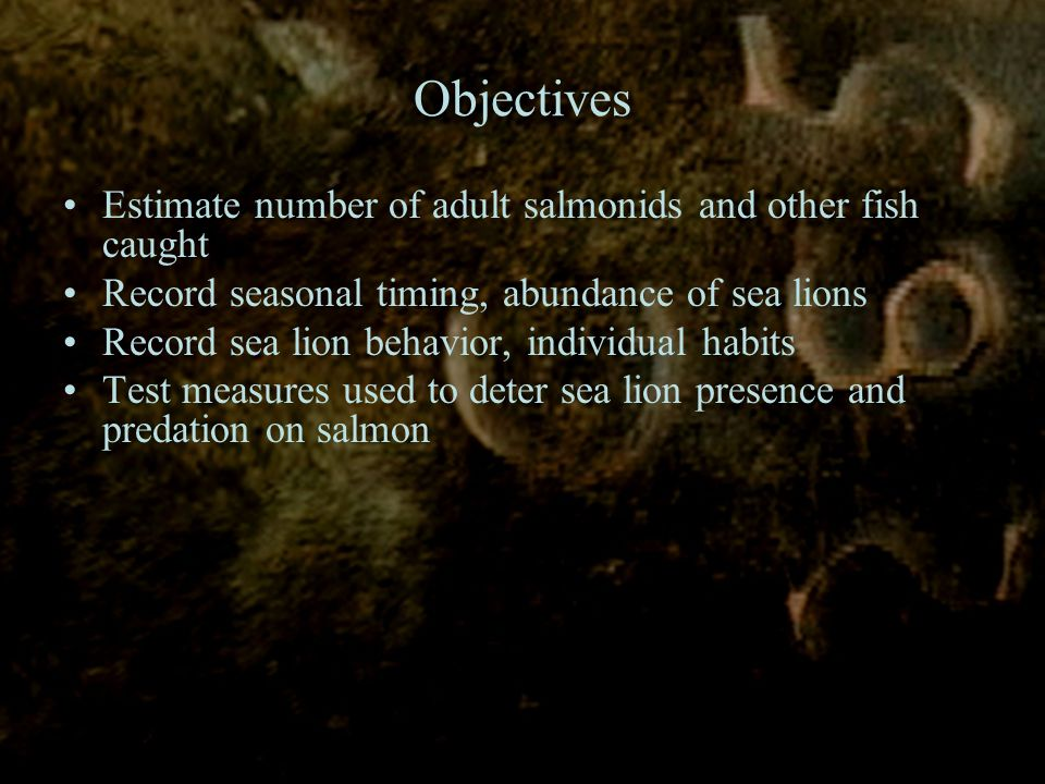 Estimate number of adult salmonids and other fish caught Record seasonal timing, abundance of sea lions Record sea lion behavior, individual habits Test measures used to deter sea lion presence and predation on salmon Objectives
