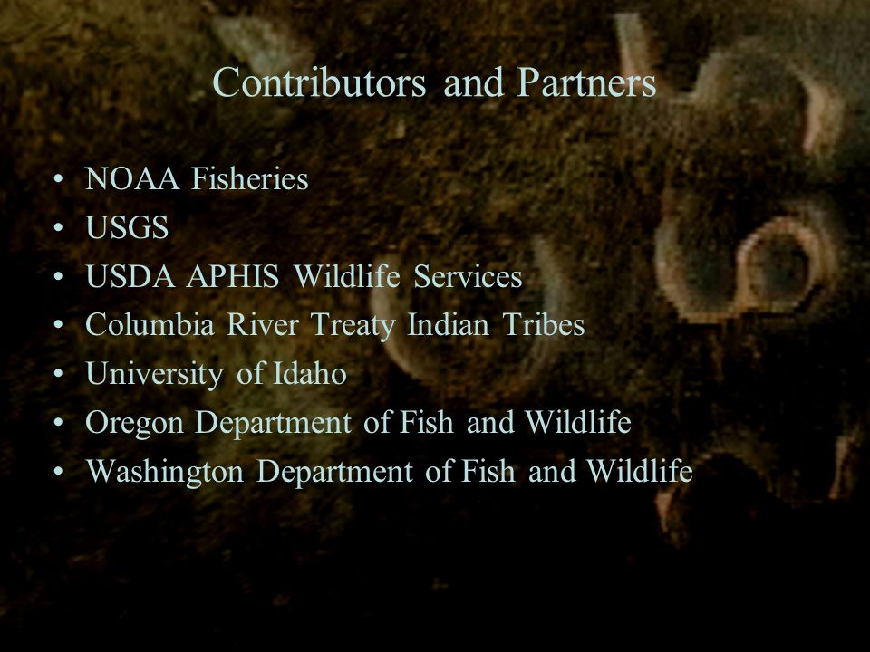 Contributors and Partners NOAA Fisheries USGS USDA APHIS Wildlife Services Columbia River Treaty Indian Tribes University of Idaho Oregon Department of Fish and Wildlife Washington Department of Fish and Wildlife