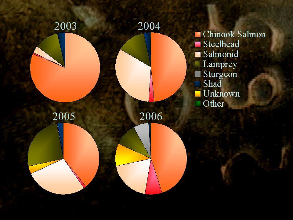 20032004 20052006