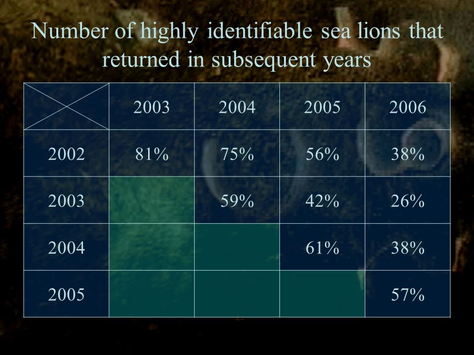 Number of highly identifiable sea lions that returned in subsequent years 2003200420052006 200281%75%56%38% 200359%42%26% 200461%38% 200557%