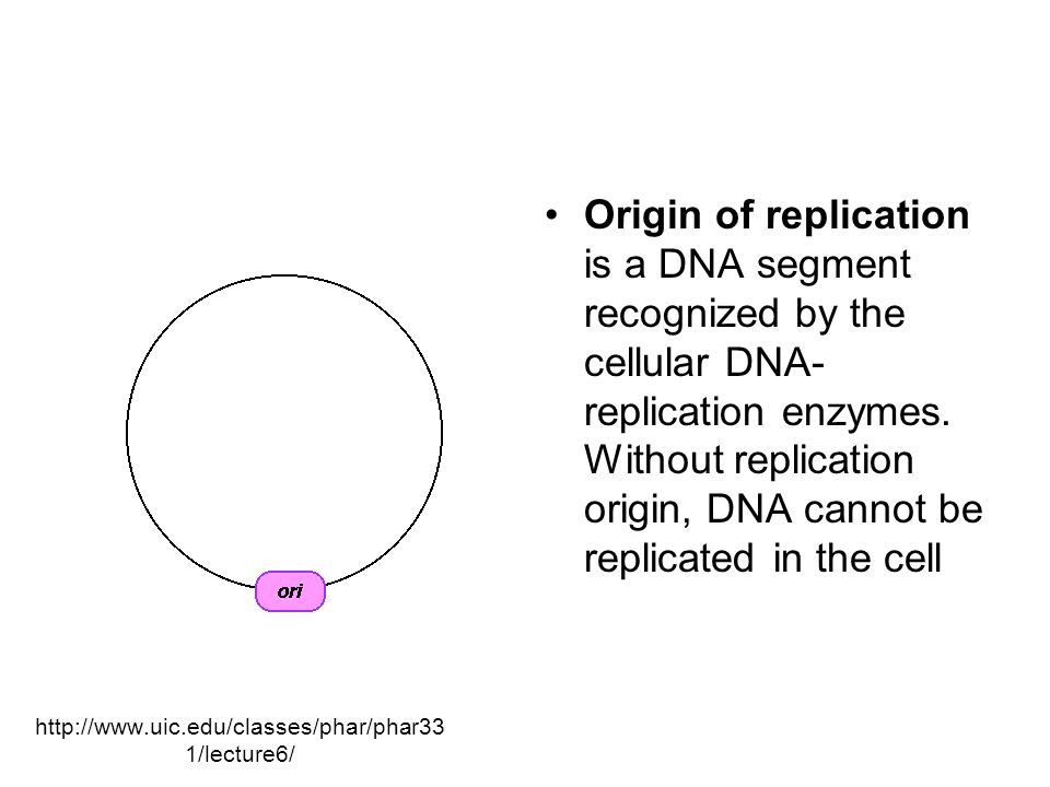 http://www.uic.edu/classes/phar/phar33 1/lecture6/ Origin of replication is a DNA segment recognized by the cellular DNA- replication enzymes.