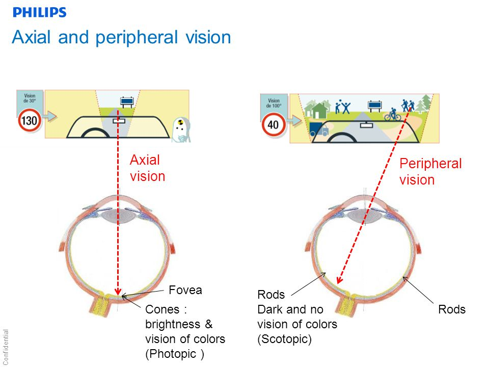 Confidential Axial and peripheral vision Axial vision Peripheral vision Cones : brightness & vision of colors (Photopic ) Fovea Rods Dark and no vision of colors (Scotopic) Rods
