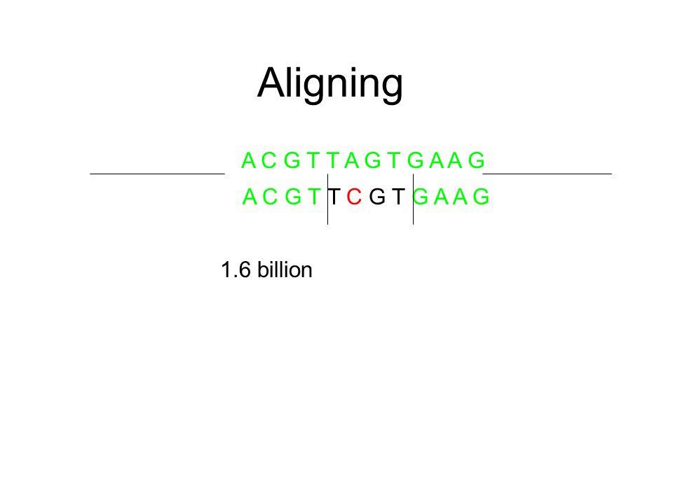 Aligning A C G T T A G T G A A G A C G T T C G T G A A G 1.6 billion