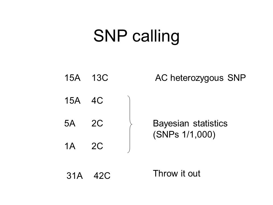 SNP calling 15A13CAC heterozygous SNP 15A4C 5A2C 1A2C Bayesian statistics (SNPs 1/1,000) 31A42C Throw it out